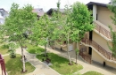 Территория, корпуса с апартаментами