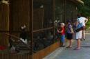 Зоопарк мини